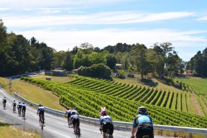 tour down under winery