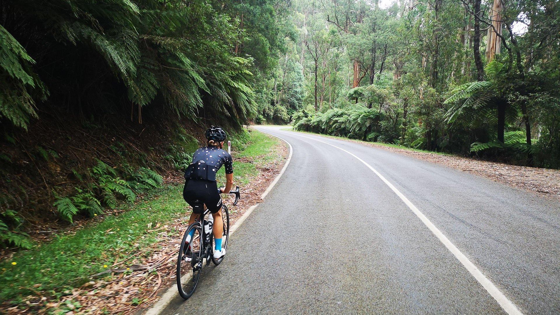 7 peaks yarra valley road rainforest ferns