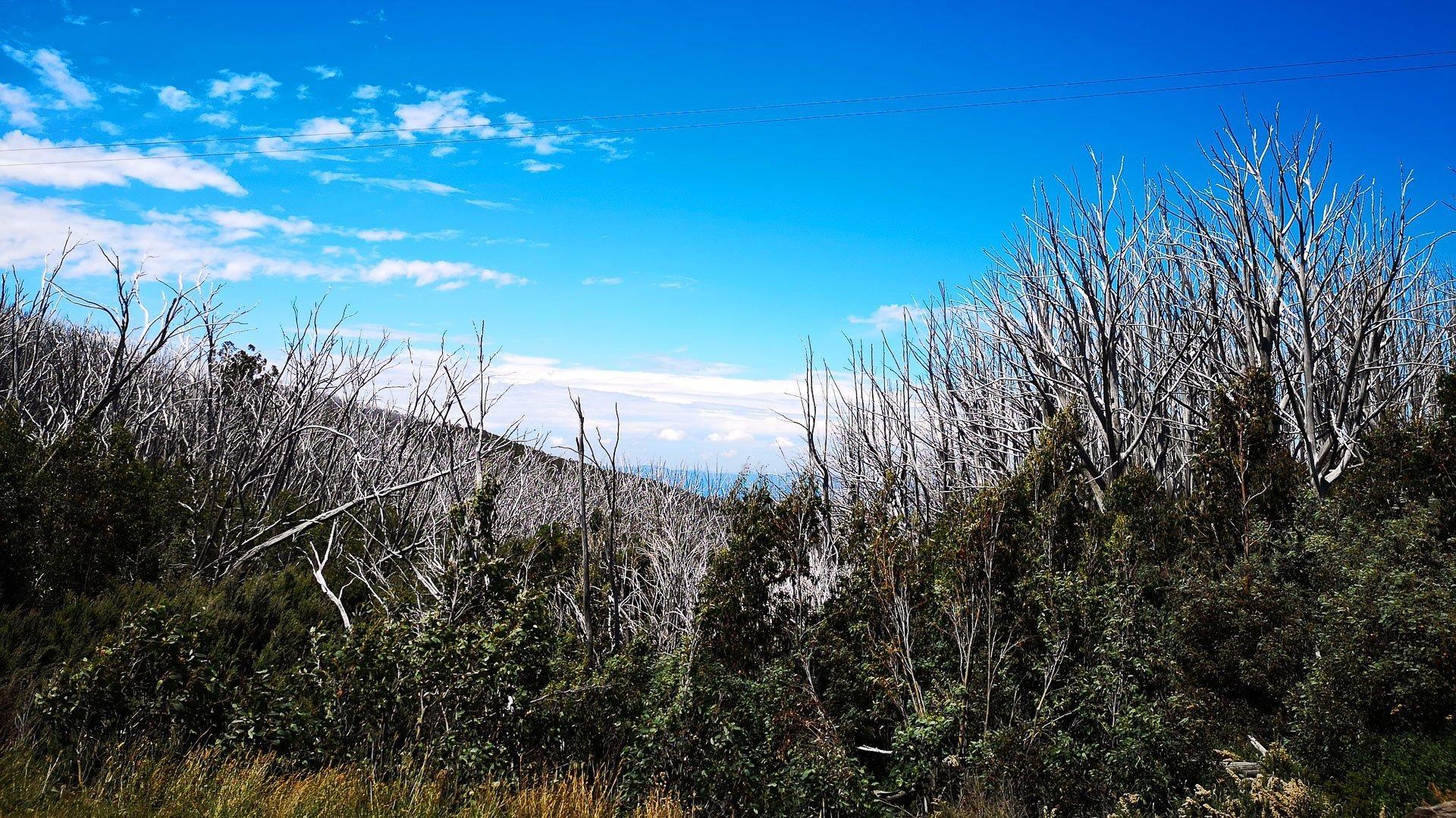 7 peaks lake mountain gum trees cycling