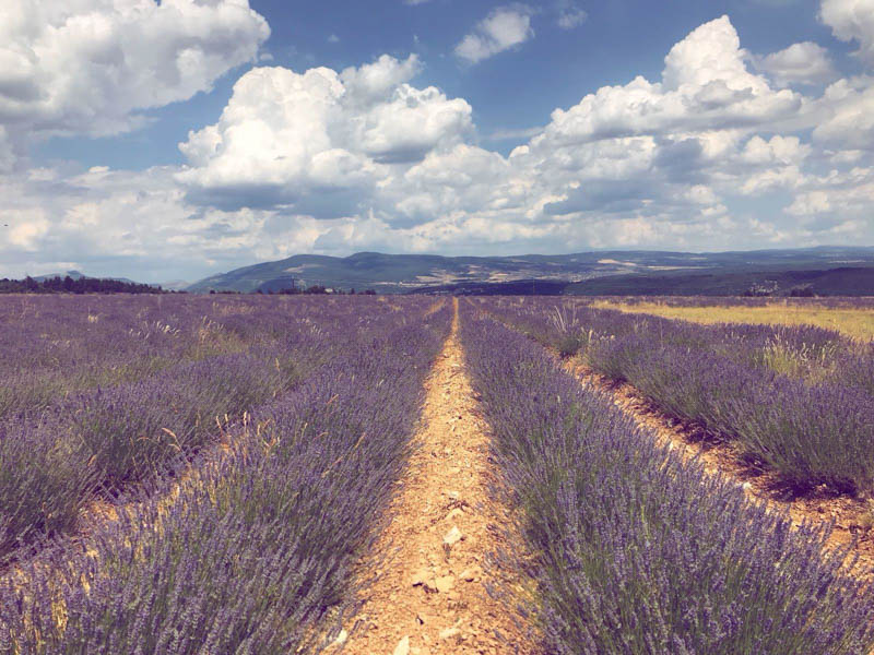 ride provence lavender fields