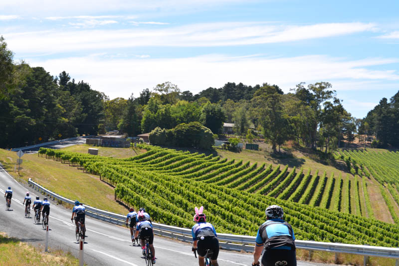 Adelaide rolling hills